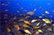 MERT Partners with Pacific Islands National Marine Sanctuaries to Identify...